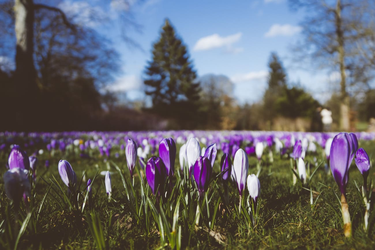 Bearwood photography - Warley Woods, spring flowers
