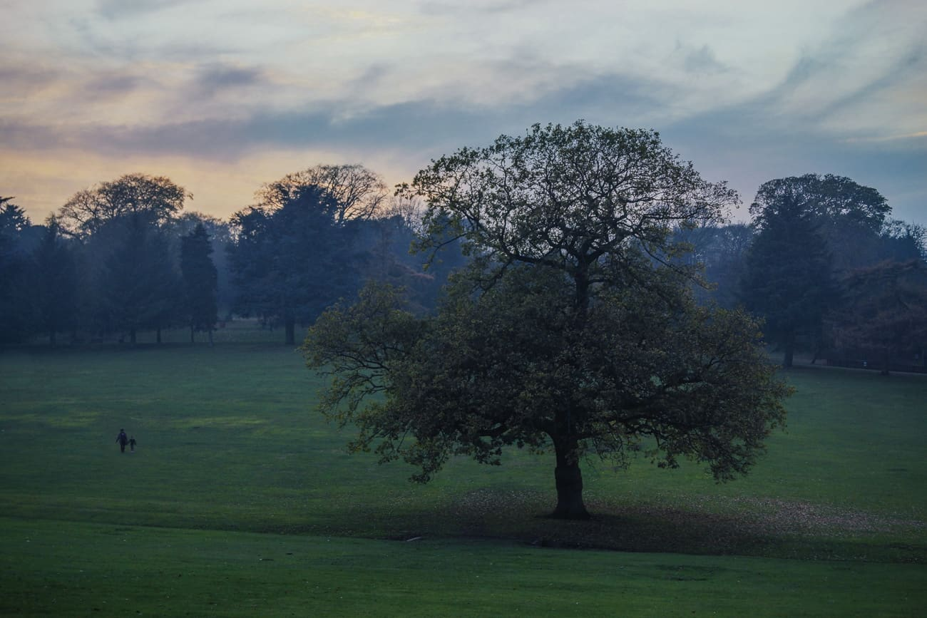 Bearwood photography - Warley Woods at dusk